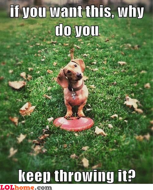 Dog's logic