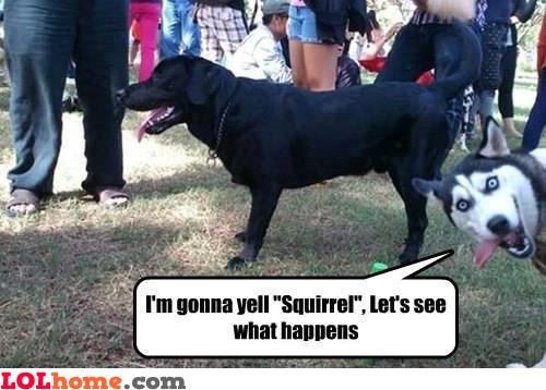 SQUIRRRRRREL!