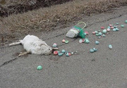 the Easter Bunny is dead