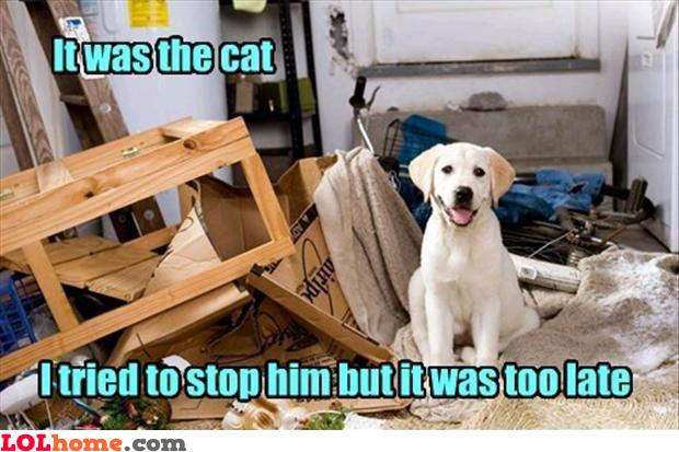 Cat's fault