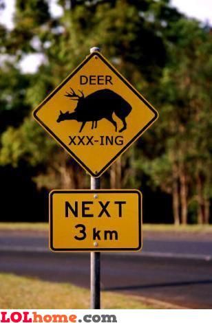 Deer xxx-ing