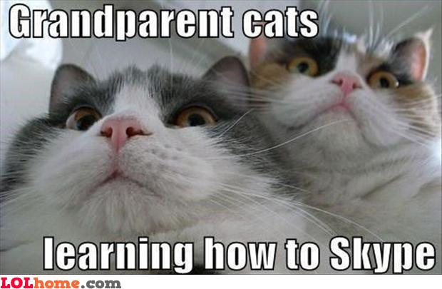 Grandparents Cats