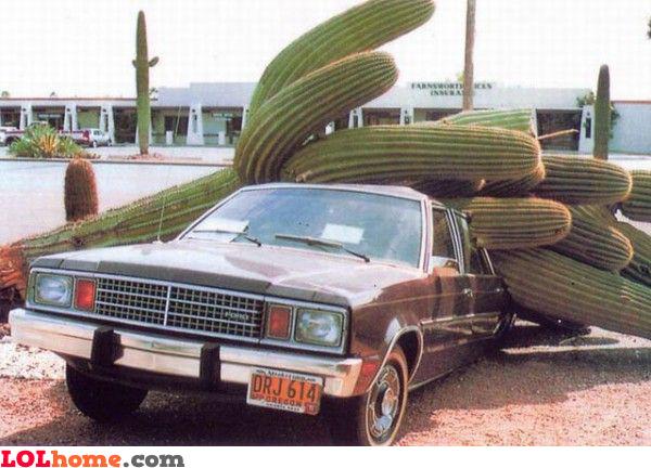 Cactus crash