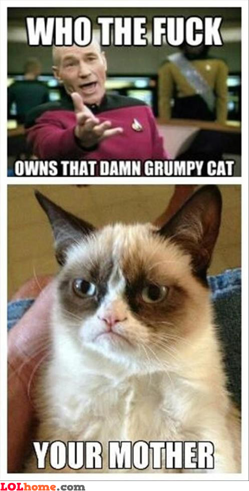 Grumpy cat strikes