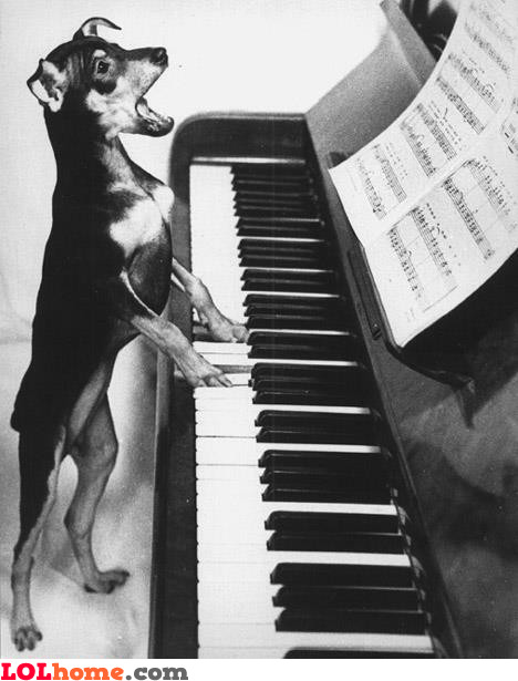Piano singer