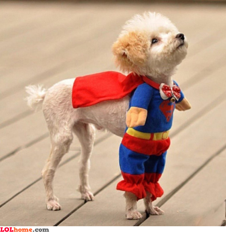 Puppy is superhero
