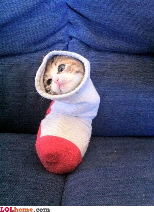 Cat in the sock