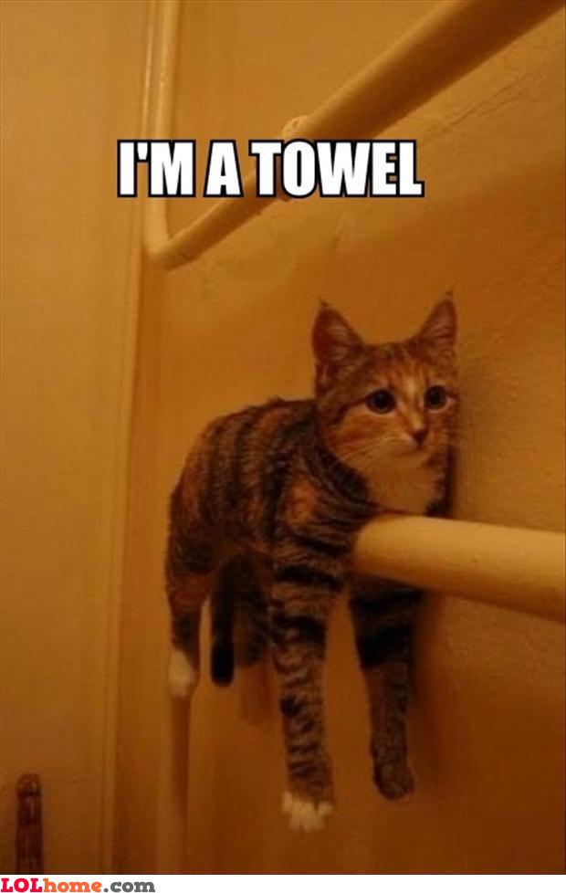 Cat is a towel