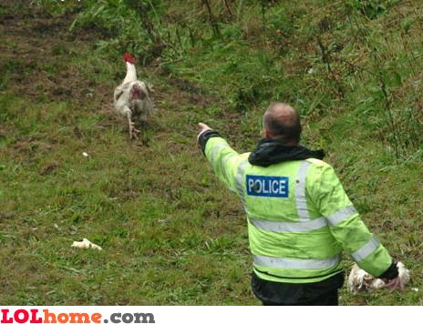 Chicken, you're under arrest!