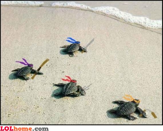 The true ninja turtles