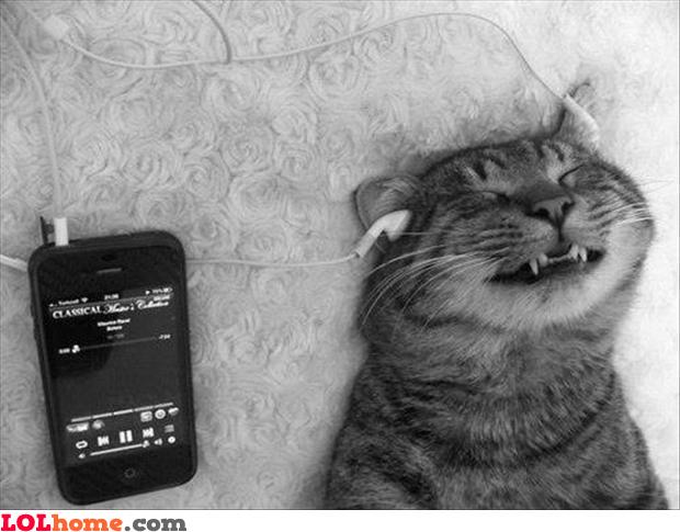 Cat likes music