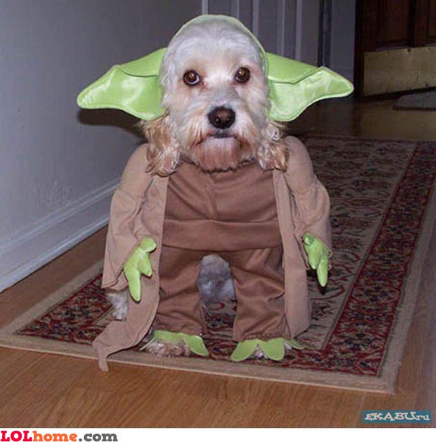 Dog is Yoda