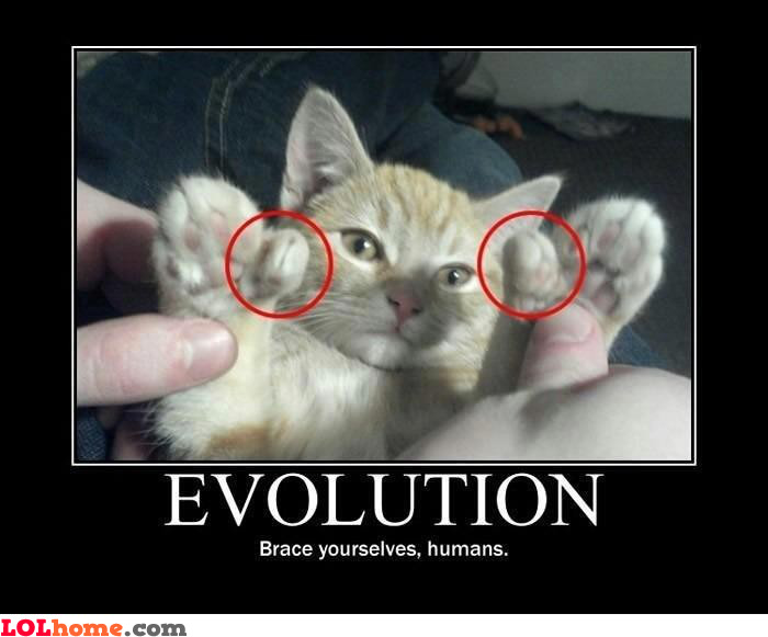 Cat evolution