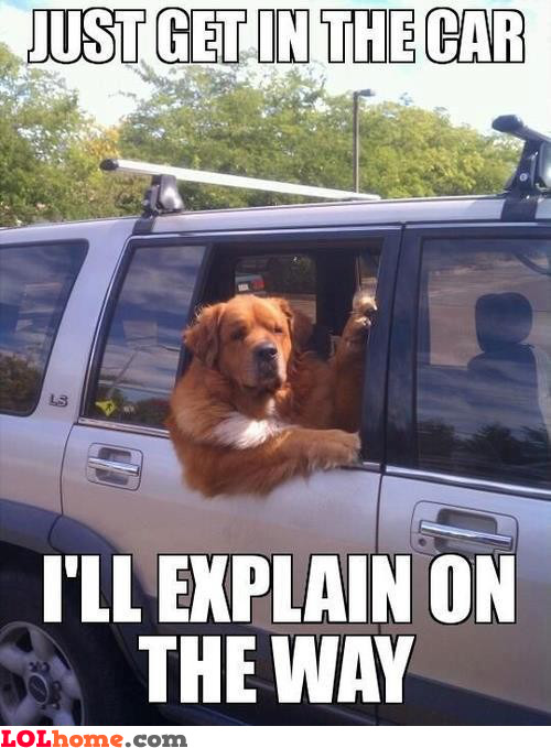 Get in, dog
