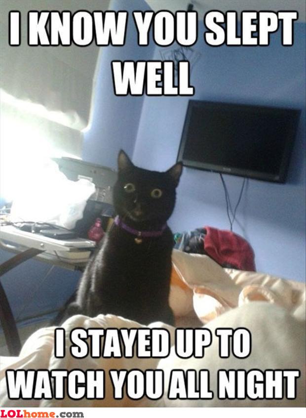 Cat observating