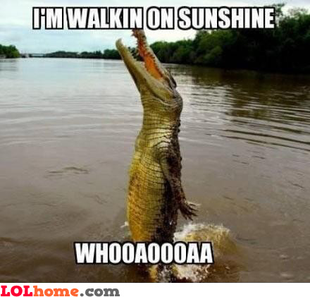 Singing crocodile