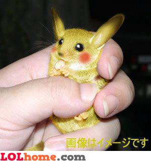 Pikachu, he's real!