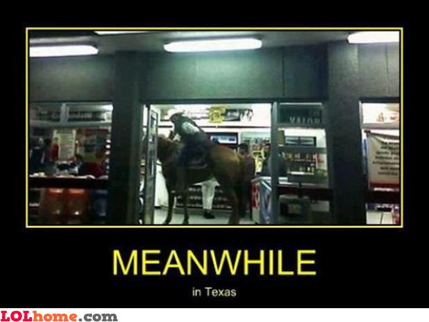 Horse-shopping
