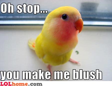 Parrot blush