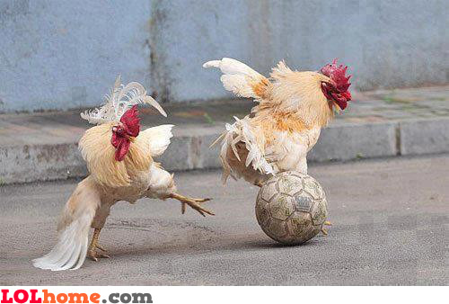 Chickball