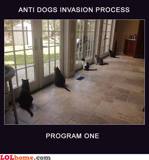 Anti-dog