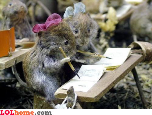 Mice at school