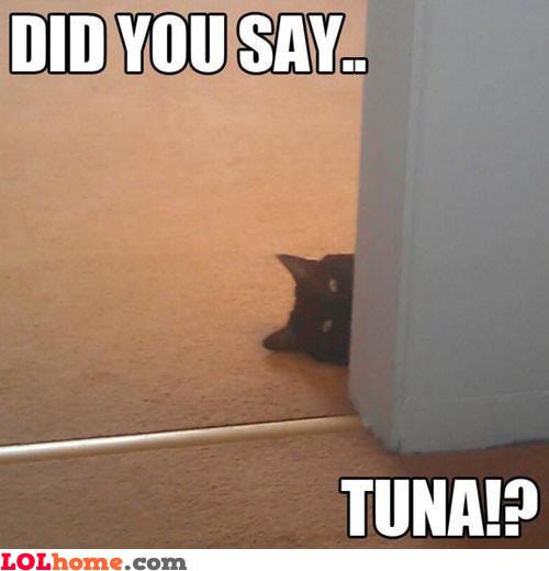 Tuna?