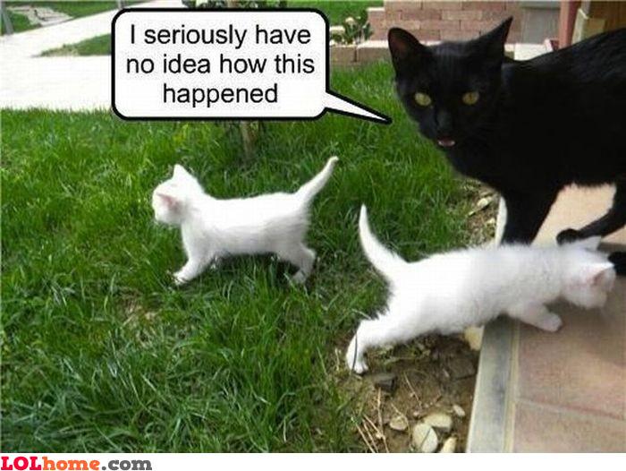 Explain the kittens