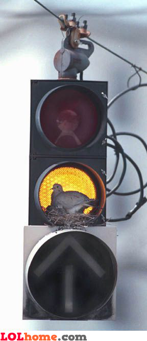 Nest in a traffic light